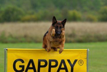 Schäferhund Erziehung: Tipps und Tricks