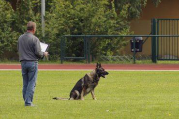 Schäferhundzucht – Schäferhundzüchter