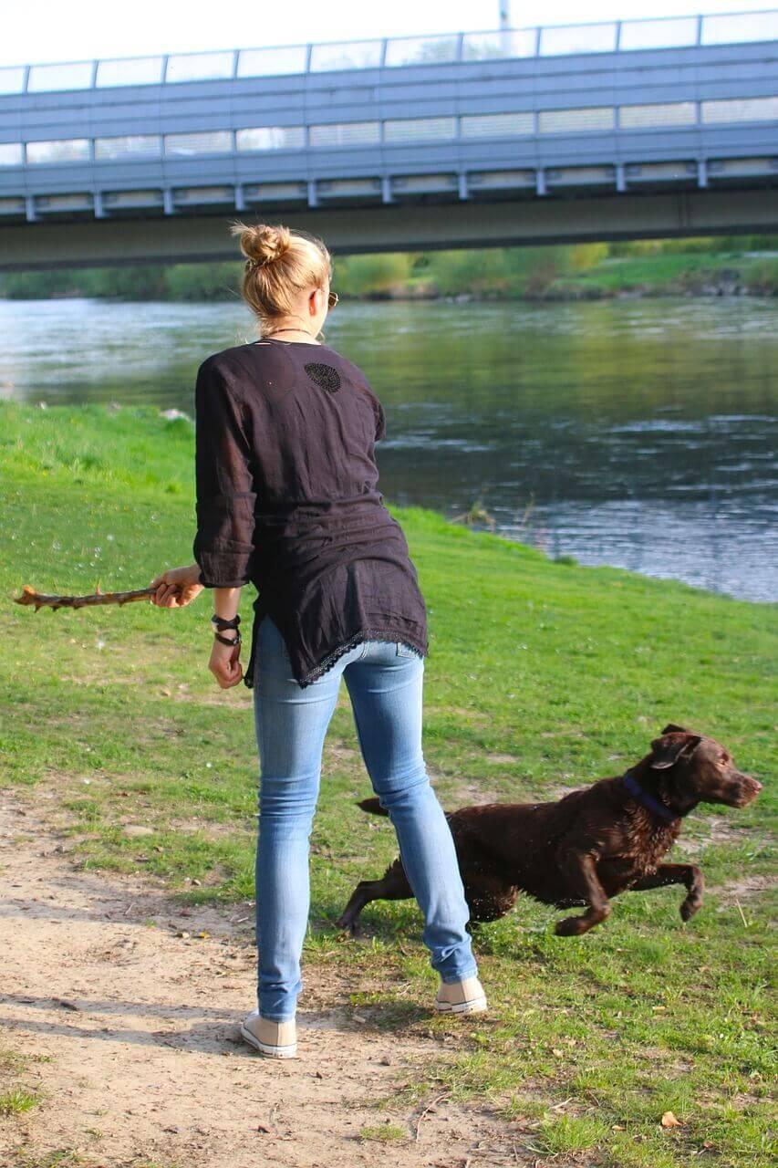 Hundeerziehung Aus