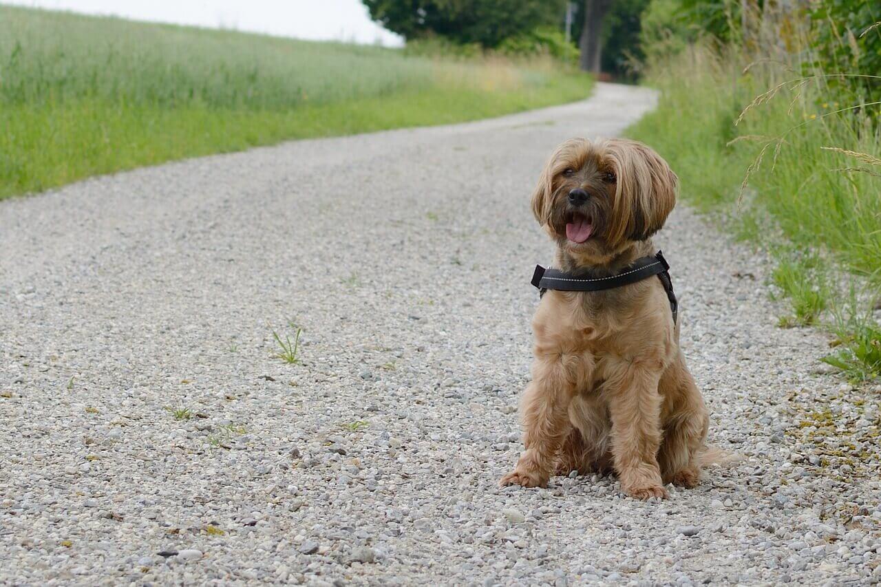 Hundeerziehung Halt