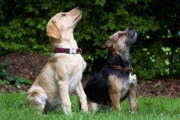 Hundeerziehung: 3 Grundkommandos