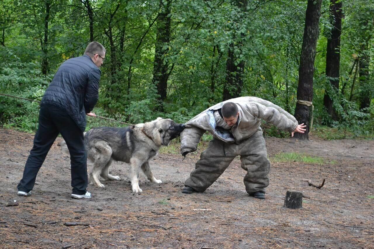 Hundesteuer bei Kampfhunden