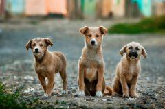 Hundekauf: Wo kaufe ich einen Hund?