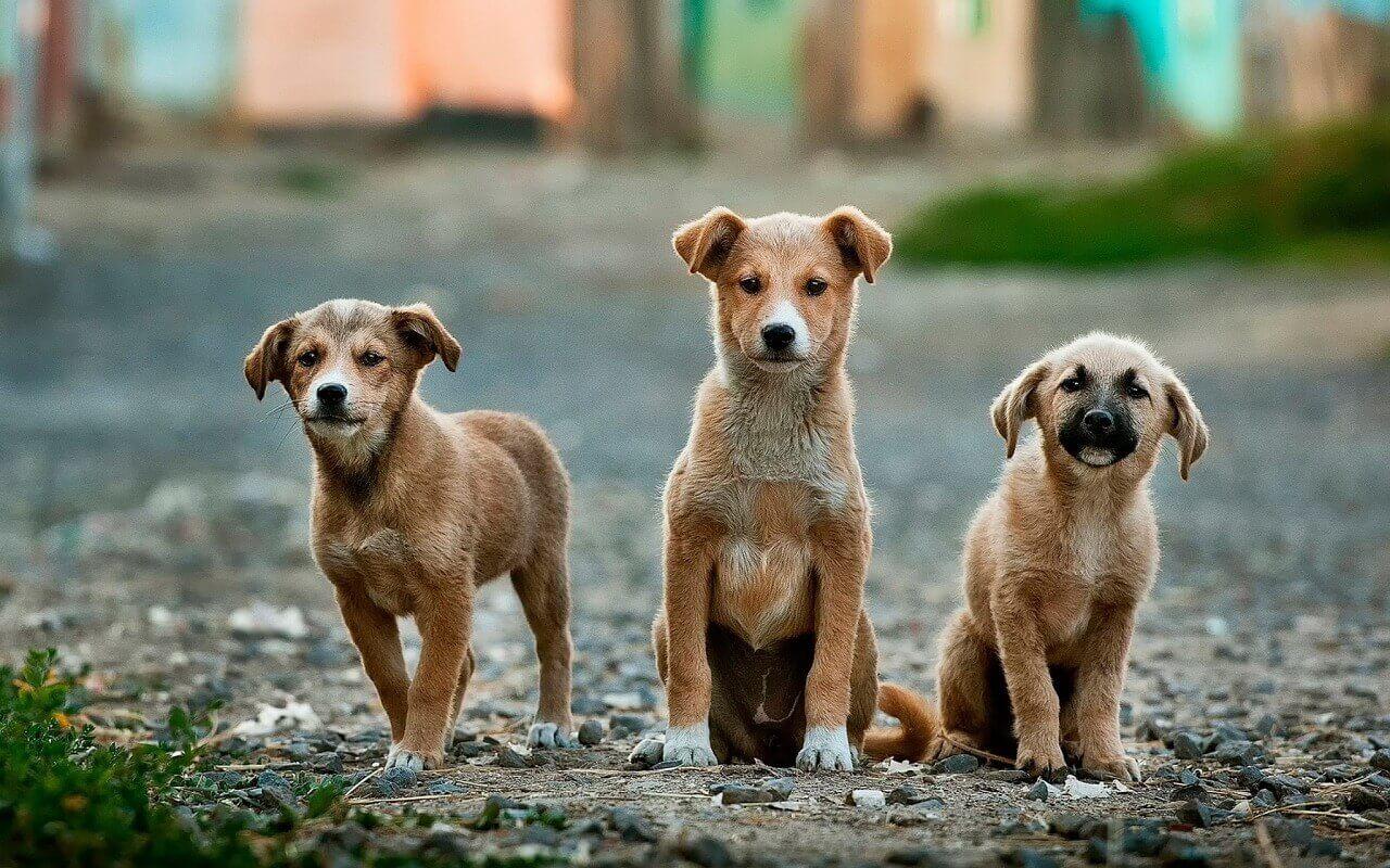 Hundekauf - Wo kaufe ich einen Hund?