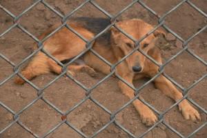 Hundekauf - Hund aus Tierheim