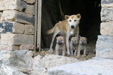 Hundekauf – Was gibt es zu beachten?
