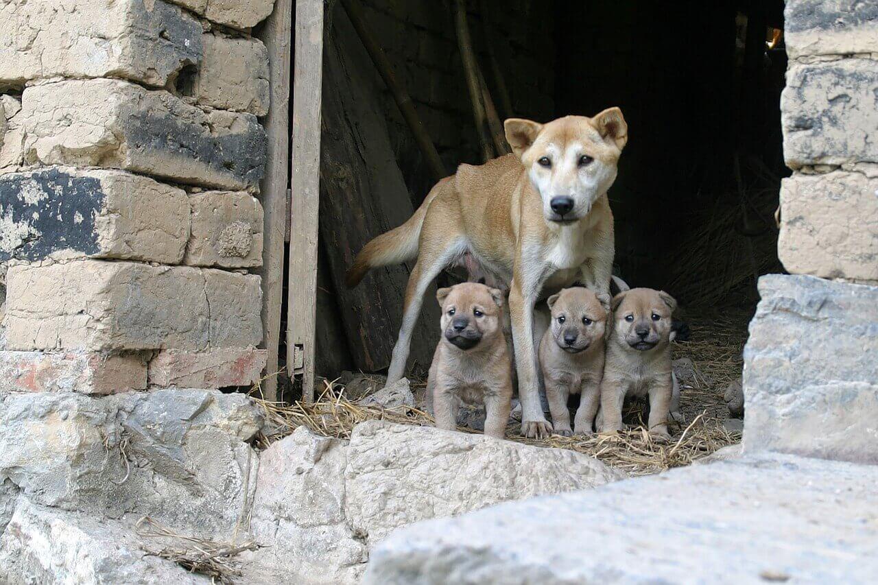 Welpen und Hundemutter