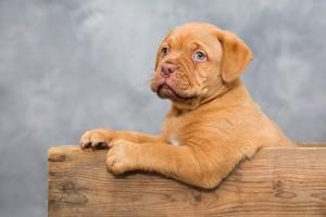 Hundekauf- Welpen kaufen