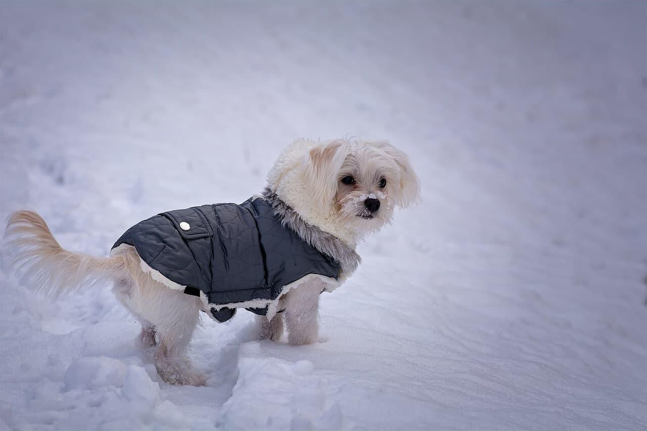 Hund mit Hundemantel