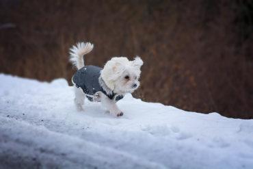 Hundemantel: Hund im Schnee