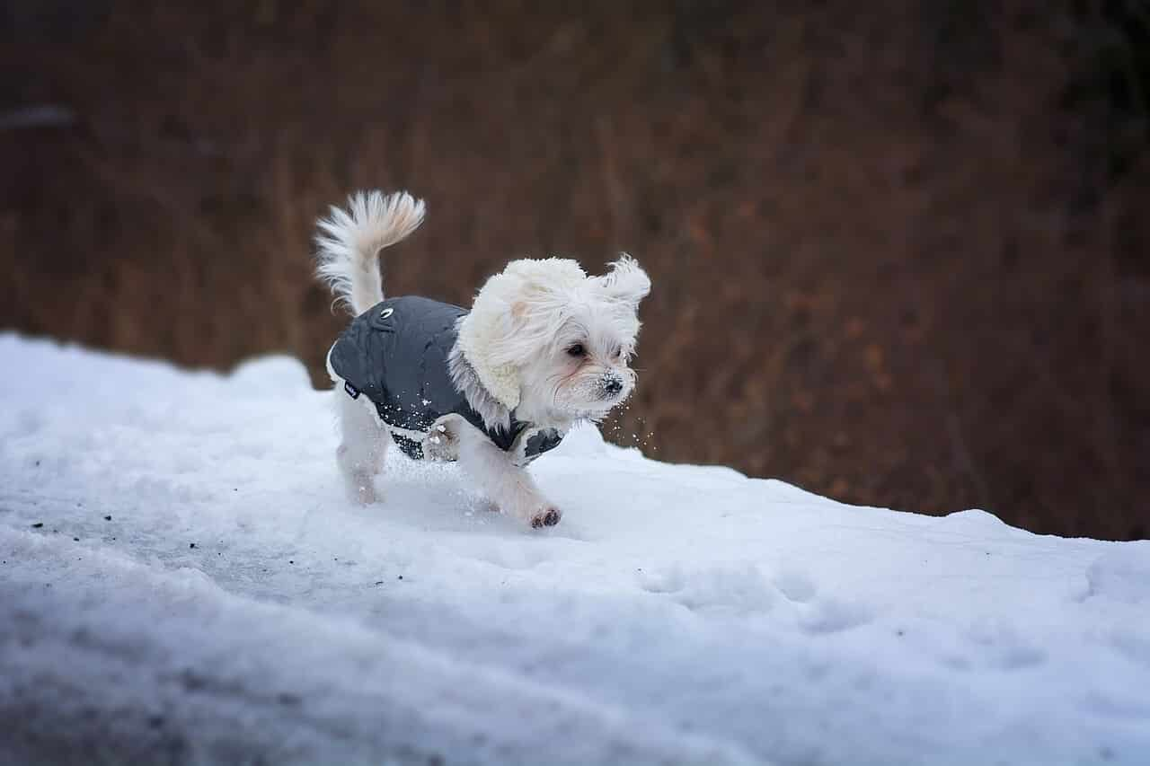 Small Dog Jacket Pattern
