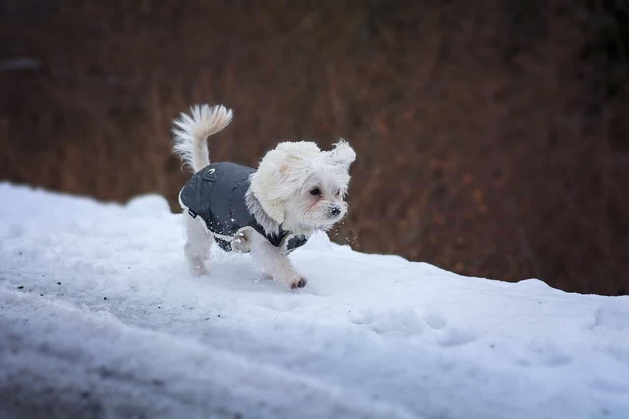 Small Dog Coat Pattern Free