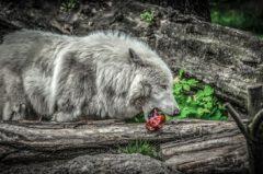 Natürliche Ernährung für Hunde: 5 Tipps für Vierbeiner